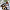 Vurulan 'Puhu' kuşu tedavi altına alındı